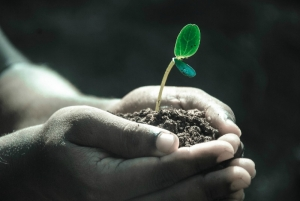 Hands holding dirt and a sprout growing from the dirt