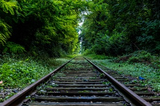 Railroad tracks in a vibrant green forest