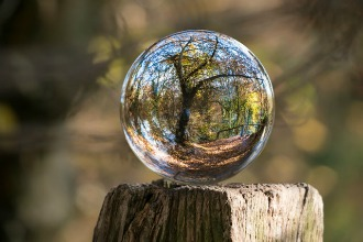 Glass orb reflecting a tree